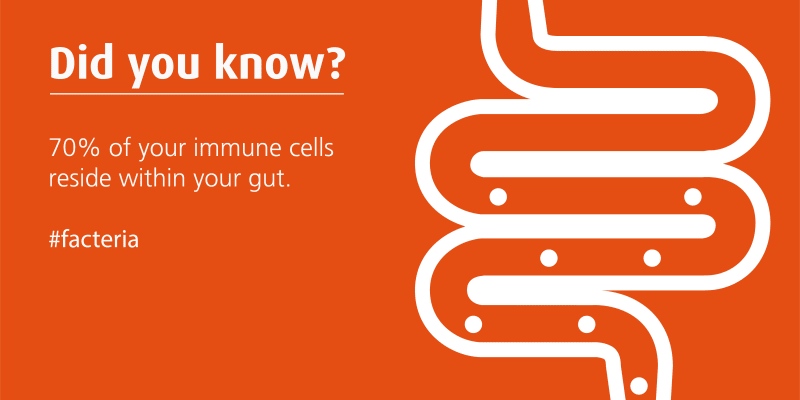 70% of immune system is in the gut