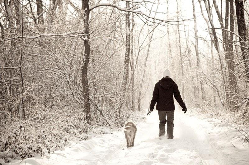 Man walking dog in the snow