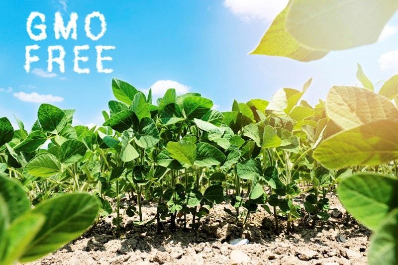 GMO free field