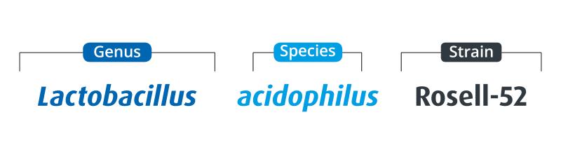 Genus: Lactobacillus; Species: acidophilus; Strain: Rosell-52