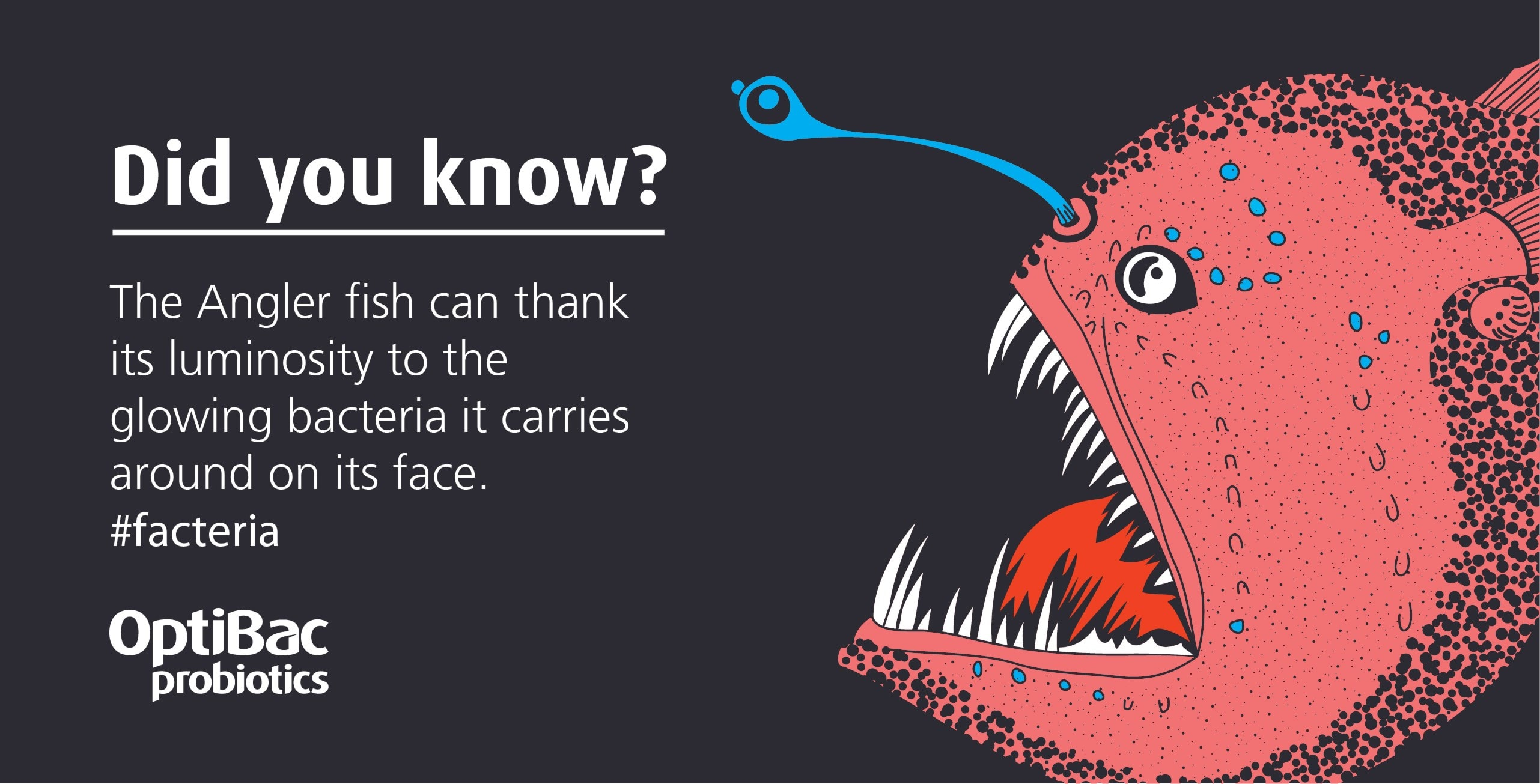 Probiotics fact about angler fish