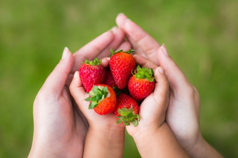 Adult and child hand holding strawberries