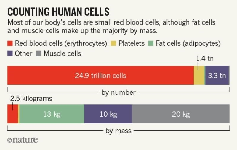 graph counting human cells