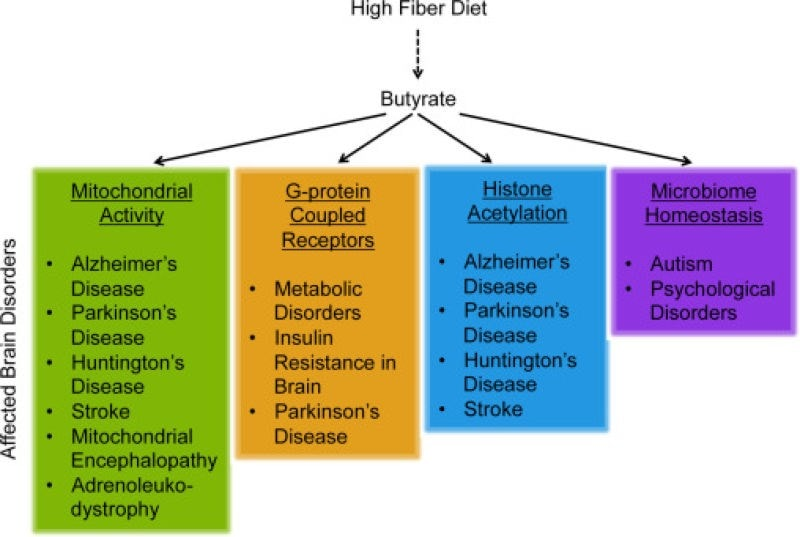 Graph image of butyrate benefits