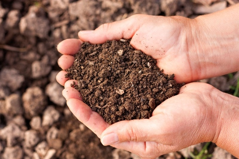 hands cupped holding soil