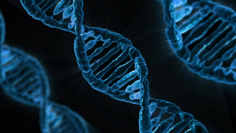DNA Gene Chromosome