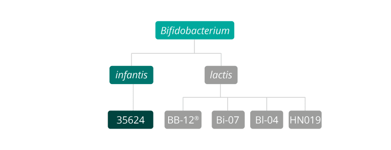 Bifidobacterium genus species & strain breakdown