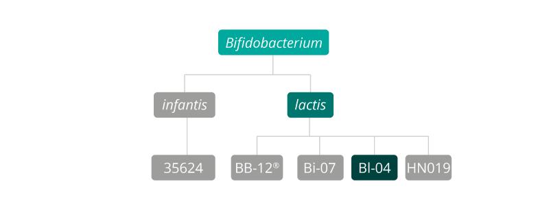B lactis Bl-04 strain family