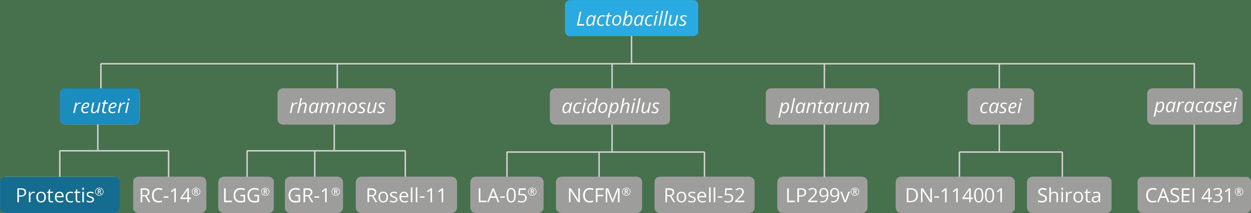 genus, sepcies & strain chart