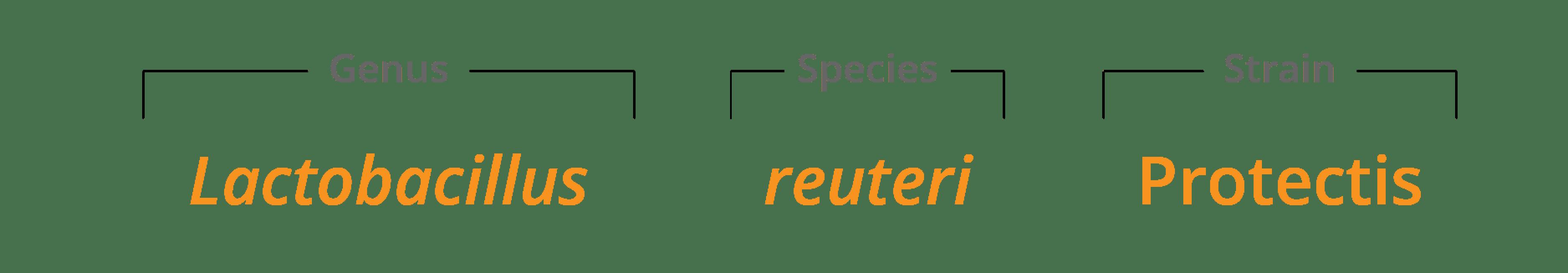 Genus species & strain Lactobacillus reuteriProtectis