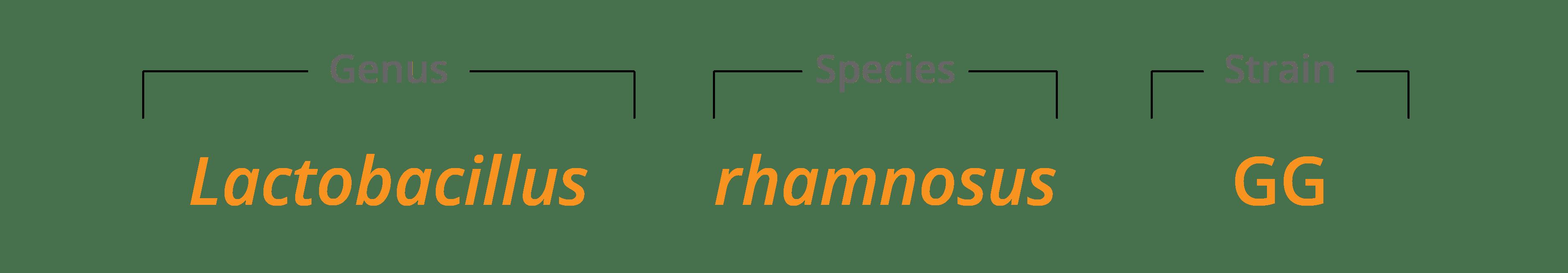 Lactobacillus rhamnosusGG strain family