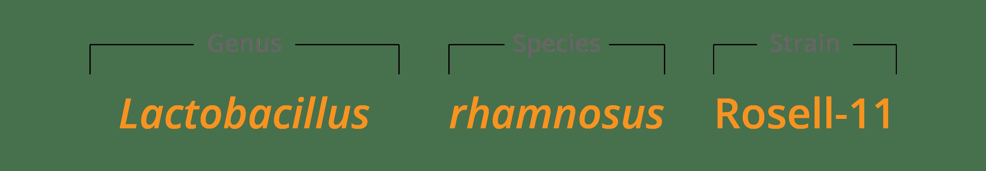 genus species & strain breakdown