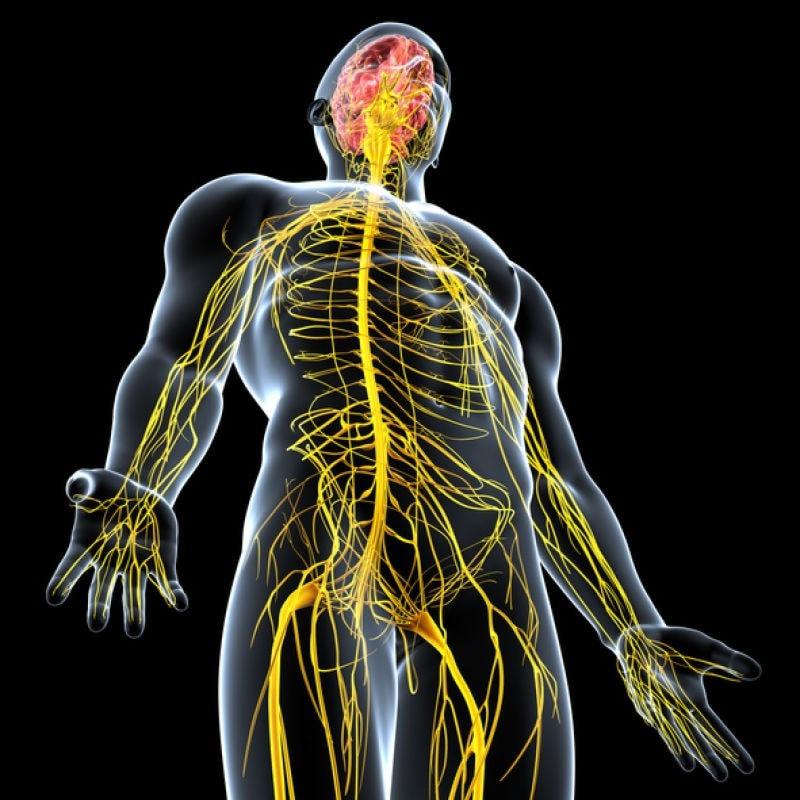 3D image central nervous system