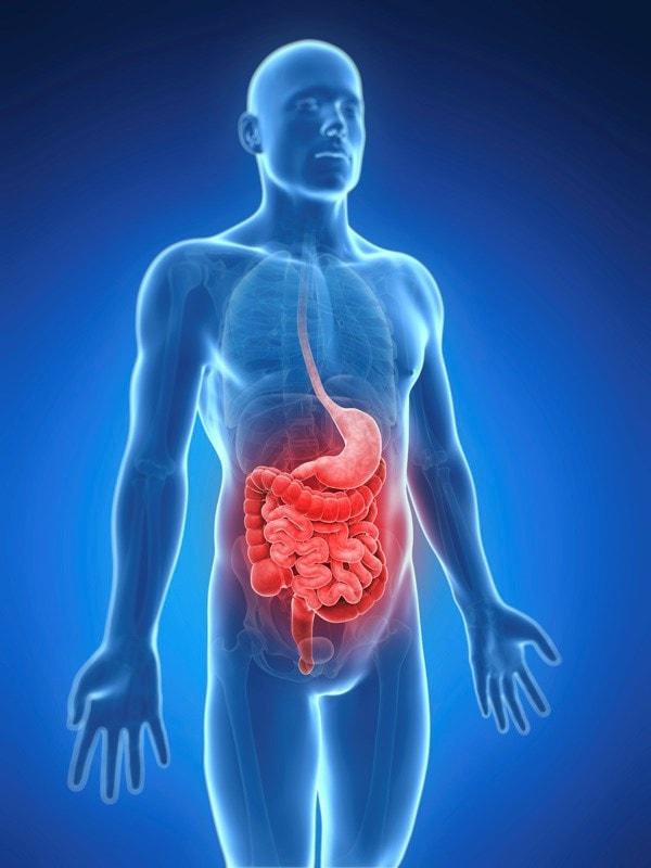 image of the intestines