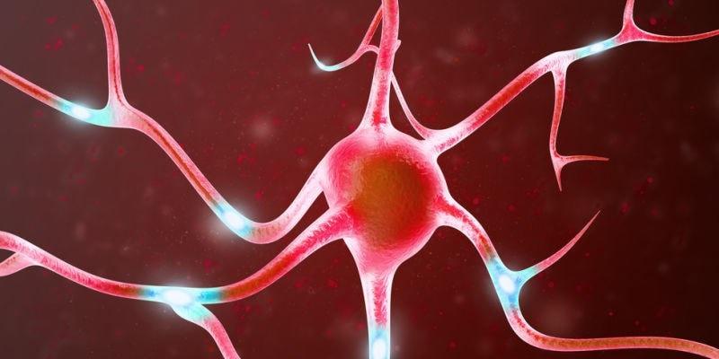 Nerve image showing gut brain connection
