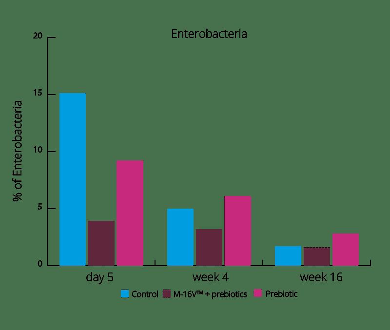 graph % Enterobacteria 16 week intervention
