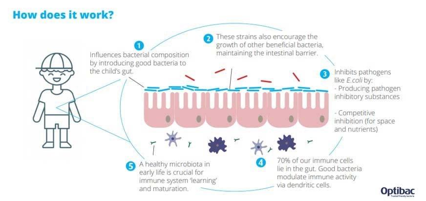 Children's microbiome