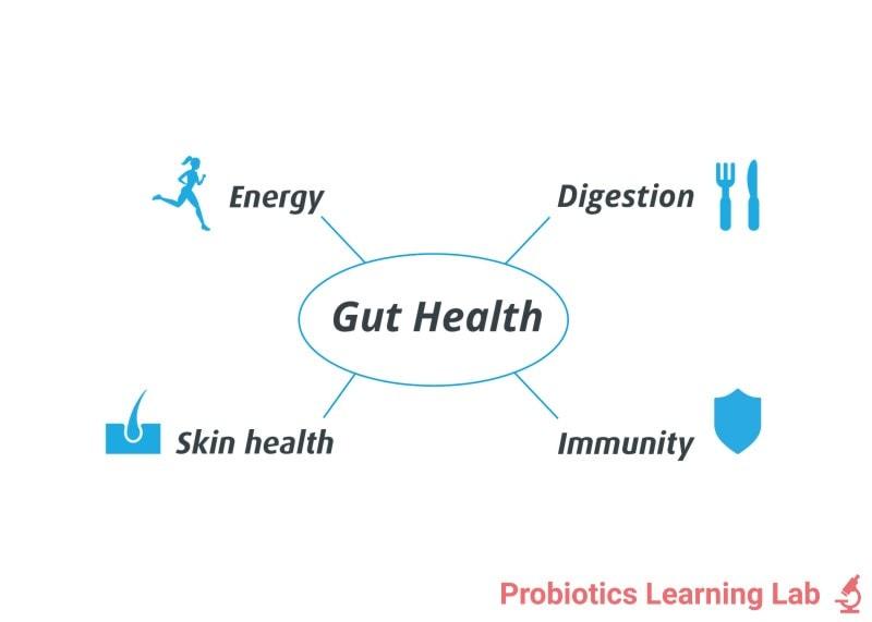 Gut health | Probiotics Learning Lab