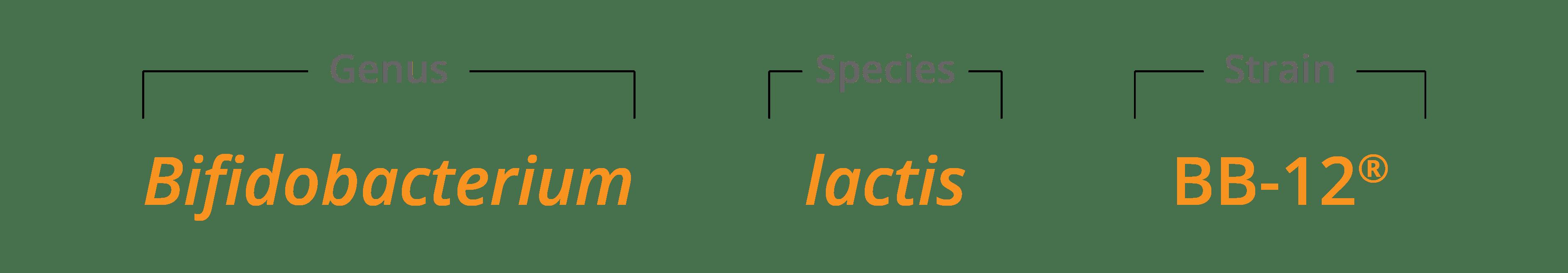 B lactis BB-12 Genus species & strain