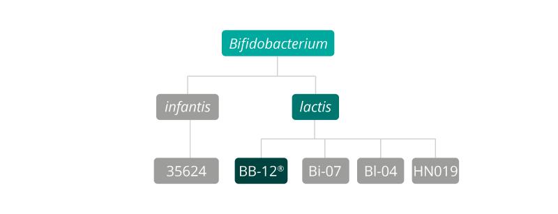 B. lactis bb-12 strain family