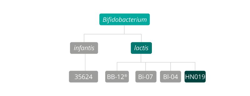 B Lactis HN019 strain family
