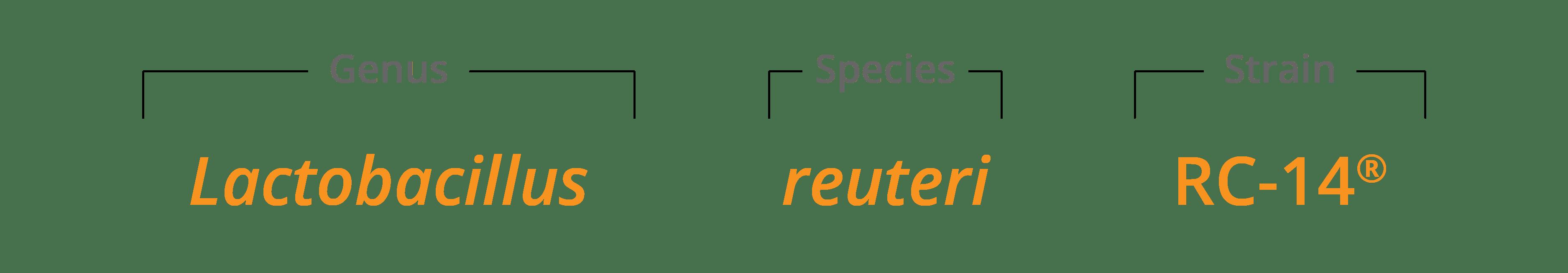 Lactobacillus reuteriRC-14 genus species & strain