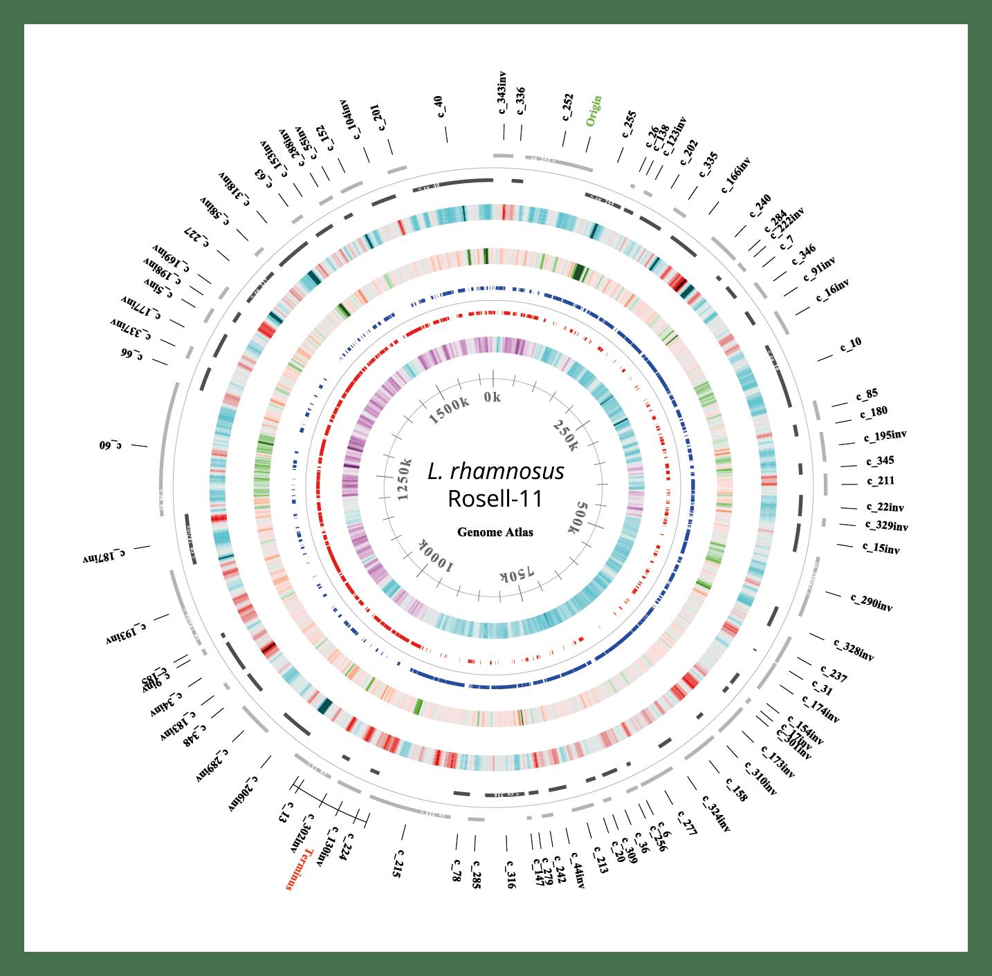 L. rhamnosusRosell-11: Genome Atlas