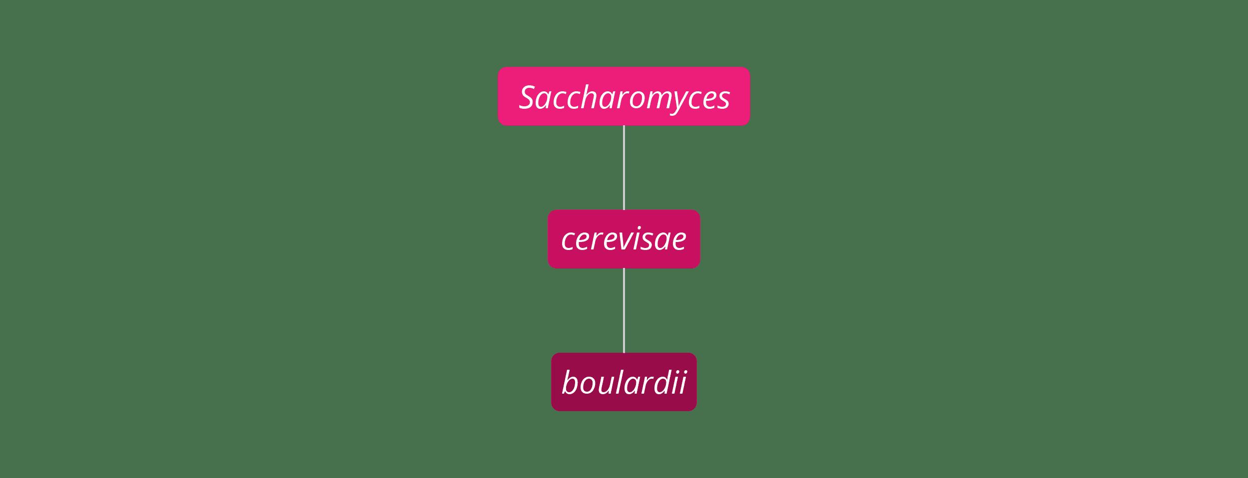 Saccharomyces boulardii strain family