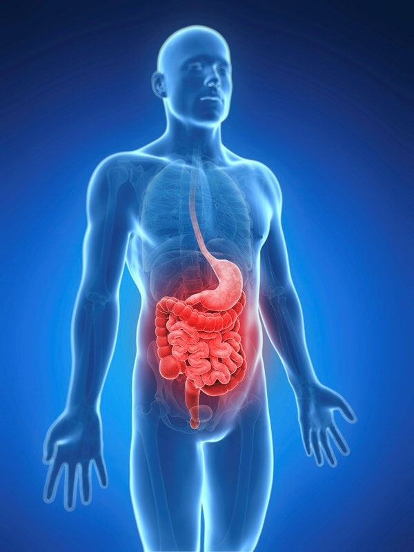3d image of the gut