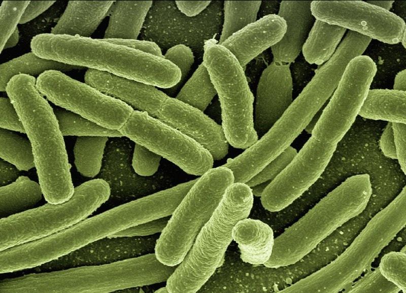 Microscopic image of bacteria