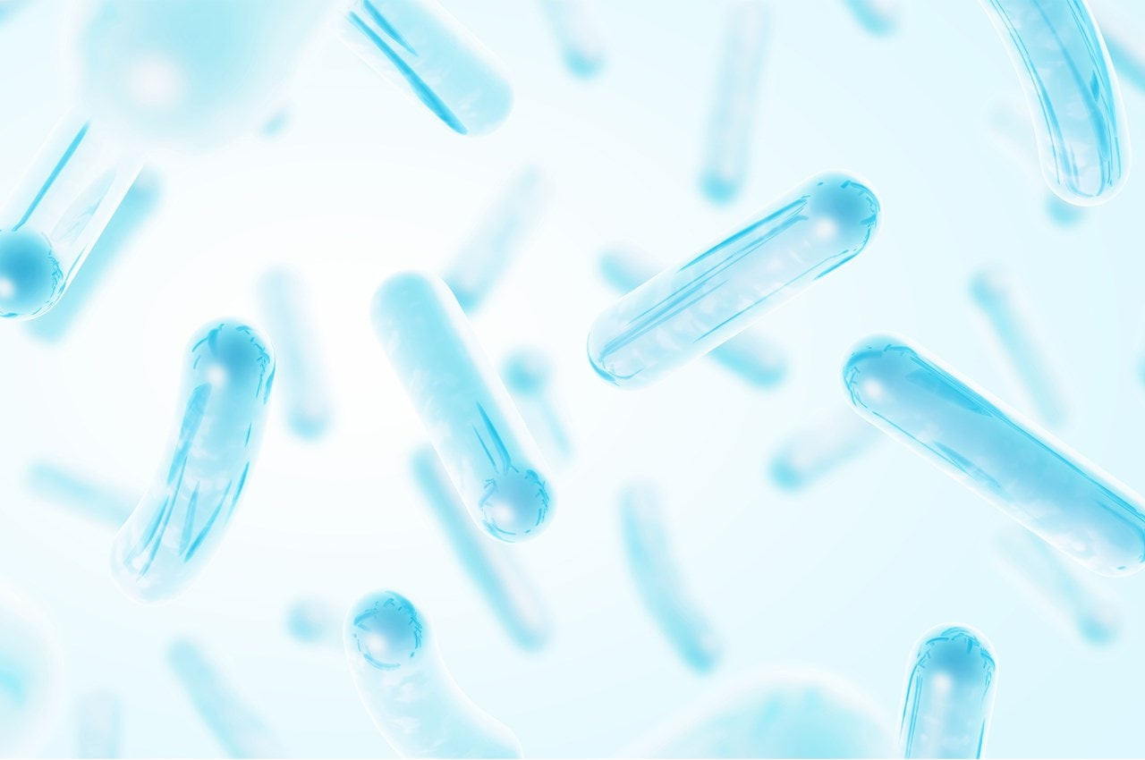 bifidobacteria